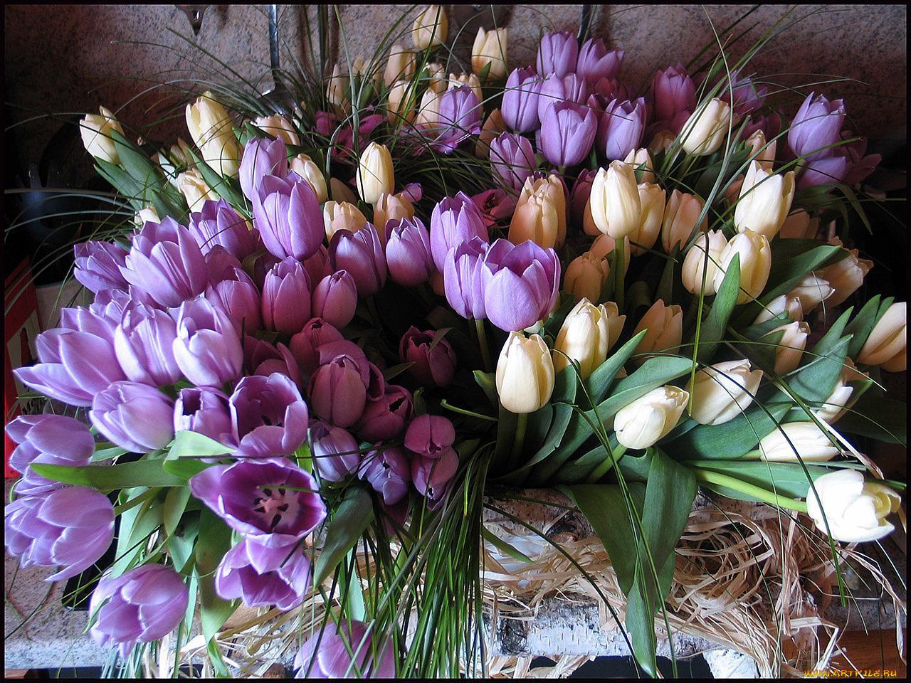 Картинки с днем рождения с тюльпанами женщине